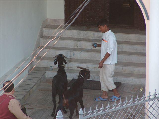 00872-nepal-eten-Dashain.JPG