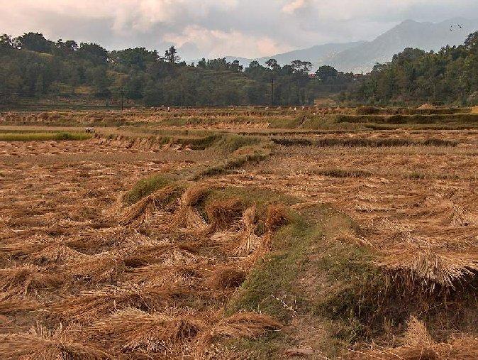 00919-nepal-rijstvelden-na-oogst.jpg