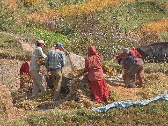 01002-nepal-omgeving-phutung.jpg